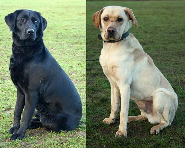 Meet some of our international trained dogs