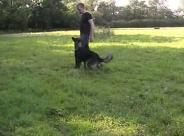WKD Trained Dogs residential dog training can change your life