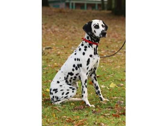 Recall Training – The Ultimate Resource To Training Your Dog An Excellent Recall
