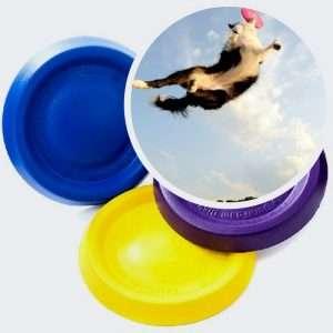 dog frisbee